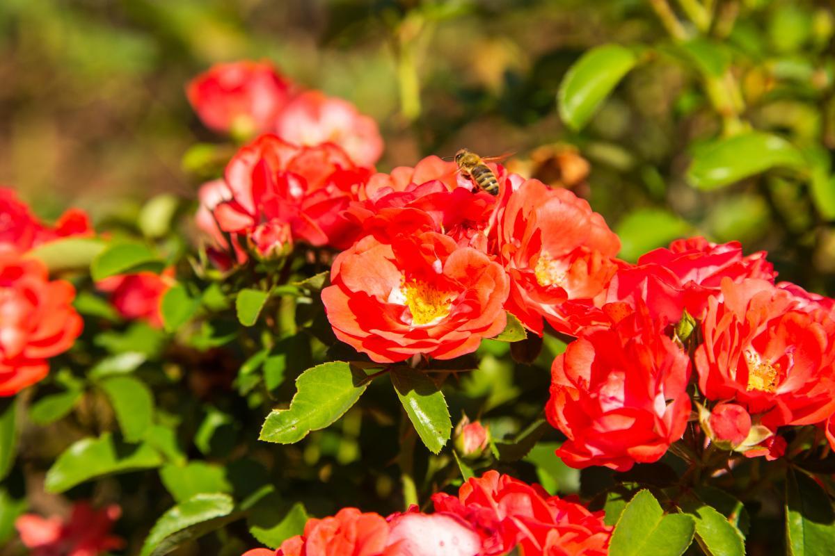 Garden_Mirador-74